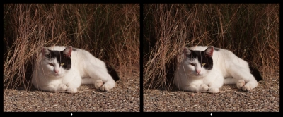 Cat1_p