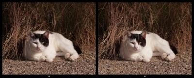 Cat1_x