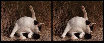 Cat2_p