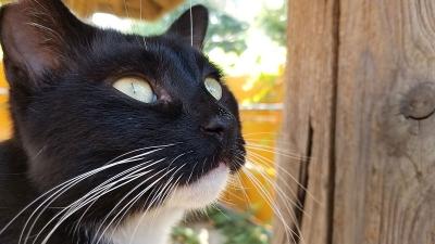Cat_comet1