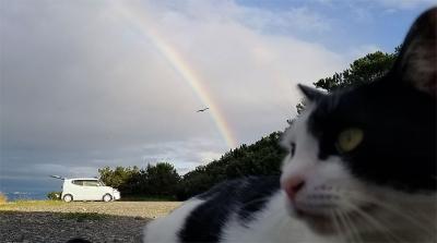 Cat_rainbow
